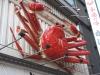 大阪・ミナミを象徴する繁華街「道頓堀」 変わりゆく道頓堀と周辺エリアの今をレポート